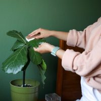 Creating a houseplant care routine