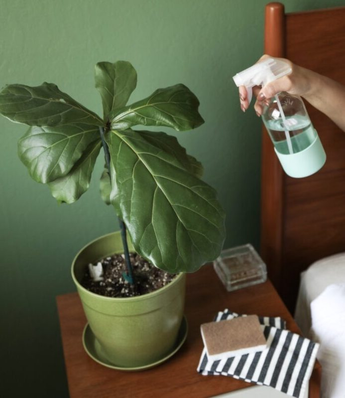 xoxojackie plant