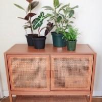 Budget and rare plant hauls!