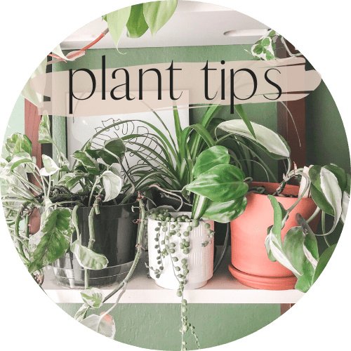 love your plant babies