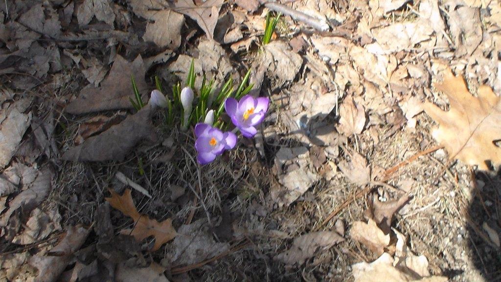 20150402XD-SpringyBlooms (2)