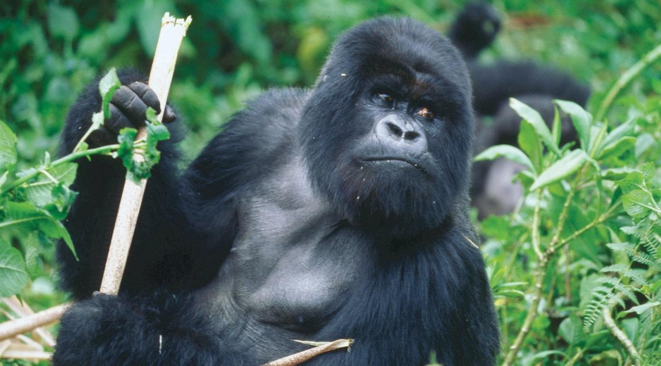 African Safari To Rwanda