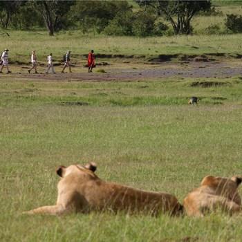 African Safari Game Walks