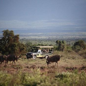 Safaris With Wildebeest In Africa