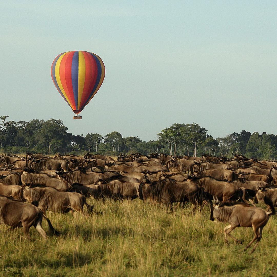 Wildebeest Migration Safaris, Masai Mara, Kenya