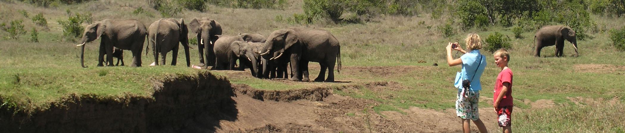 Elephant Safari Tanzania