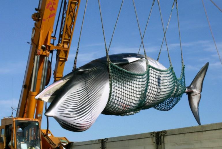 大麻可以适当抽,酒却不能随意喝,美国为何有如此奇怪的政策?
