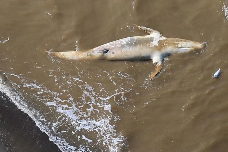德国科隆南部的巴特诺因阿尔-阿尔韦勒城镇受灾情况严重,一名男子在水淹及膝的积水中涉水而行。(图取自路透社)