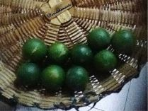 the green harvest