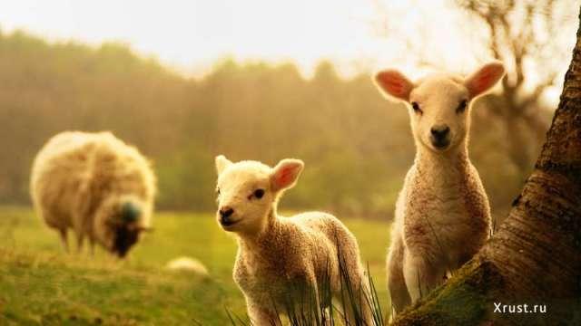 Где найти приколы про животных