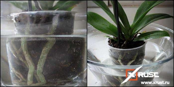 Орхидея будет цвести 3 раза в год