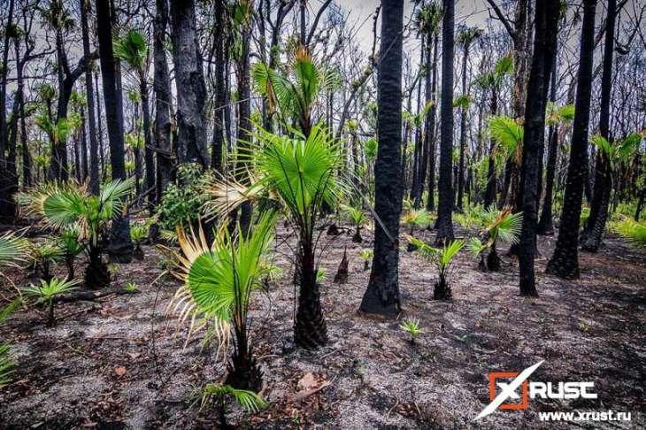 Оживление природы Австралии после пожаров