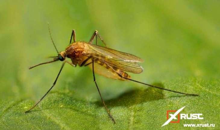 В России могут исчезнуть комары