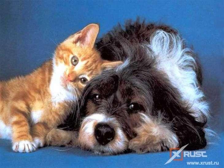 Ученые установили кто умнее: собаки или кошки