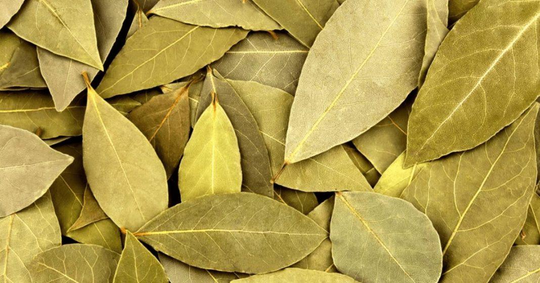 Φύλλα Δάφνης και ιδιότητες τους