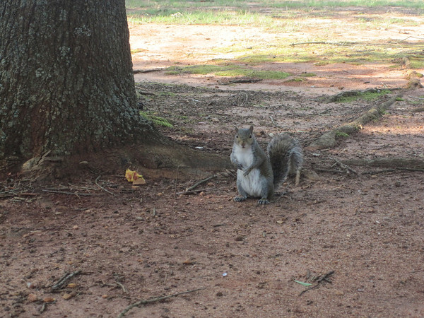 Squirrels make me nervous - Blue