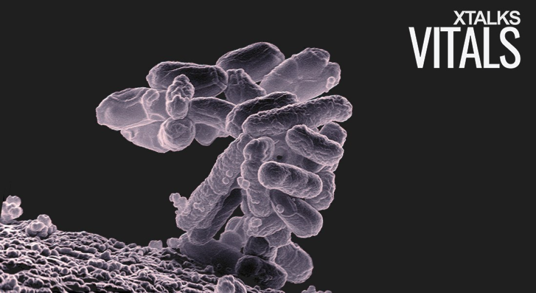 Evolution Of Gut Bacteria Affected By Host Immune System