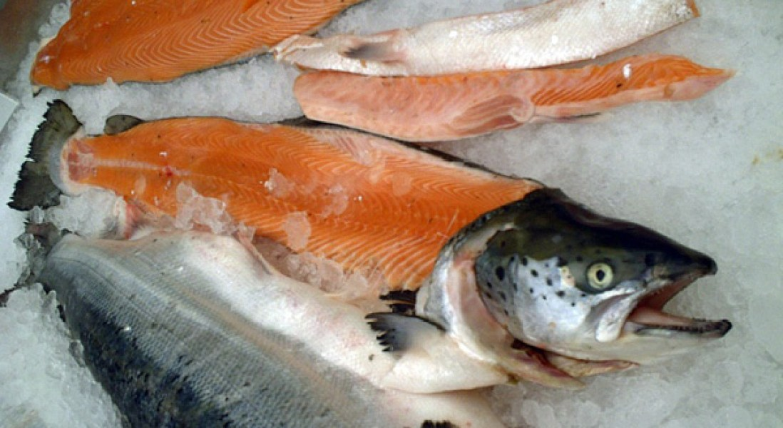 Farmed Salmon Has Half The Omega-3s It Did Five Years Ago