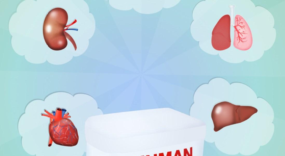 Microbes Impact Organ Transplant Success