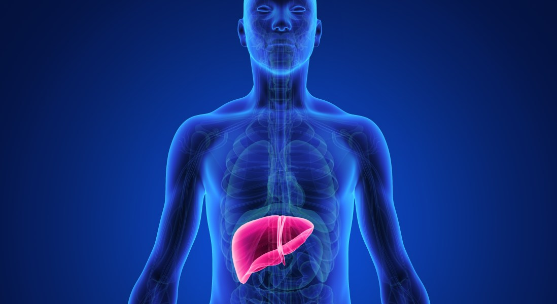 Protein Protects Against Non-Alcoholic Fatty Liver Disease