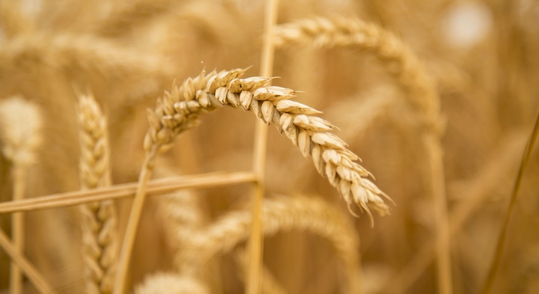 ImmusanT Releases Phase I Clinical Trial Results for Celiac Therapeutic