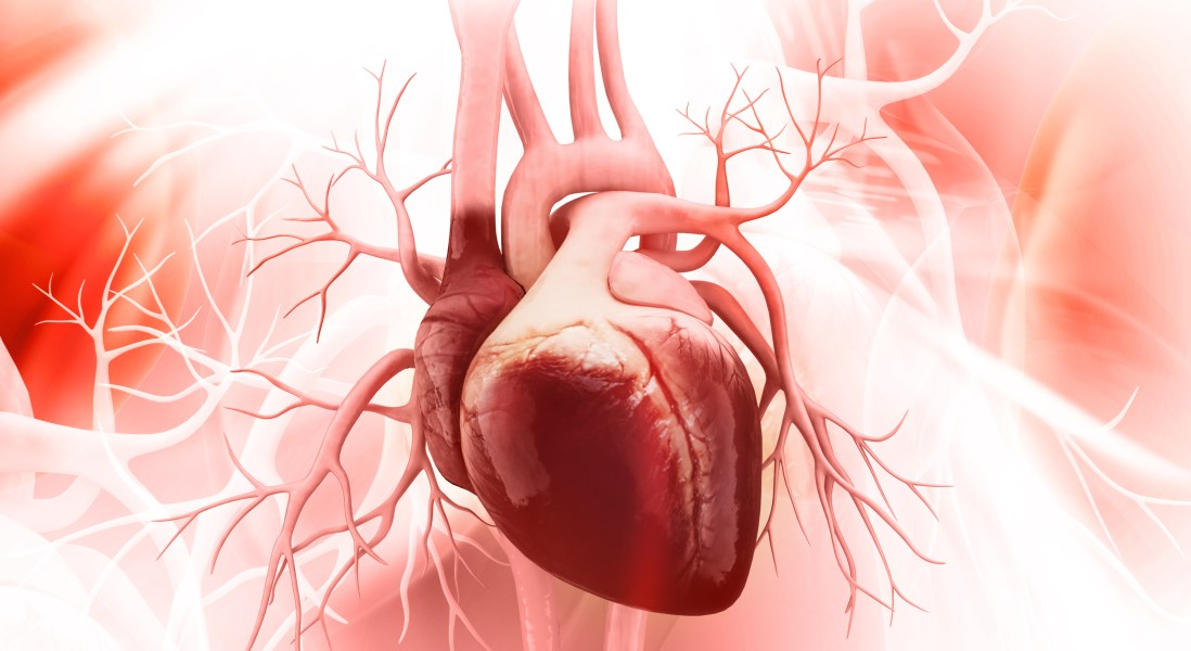 Bioengineered Heart Valve Regenerates Just Like Human Heart Tissue