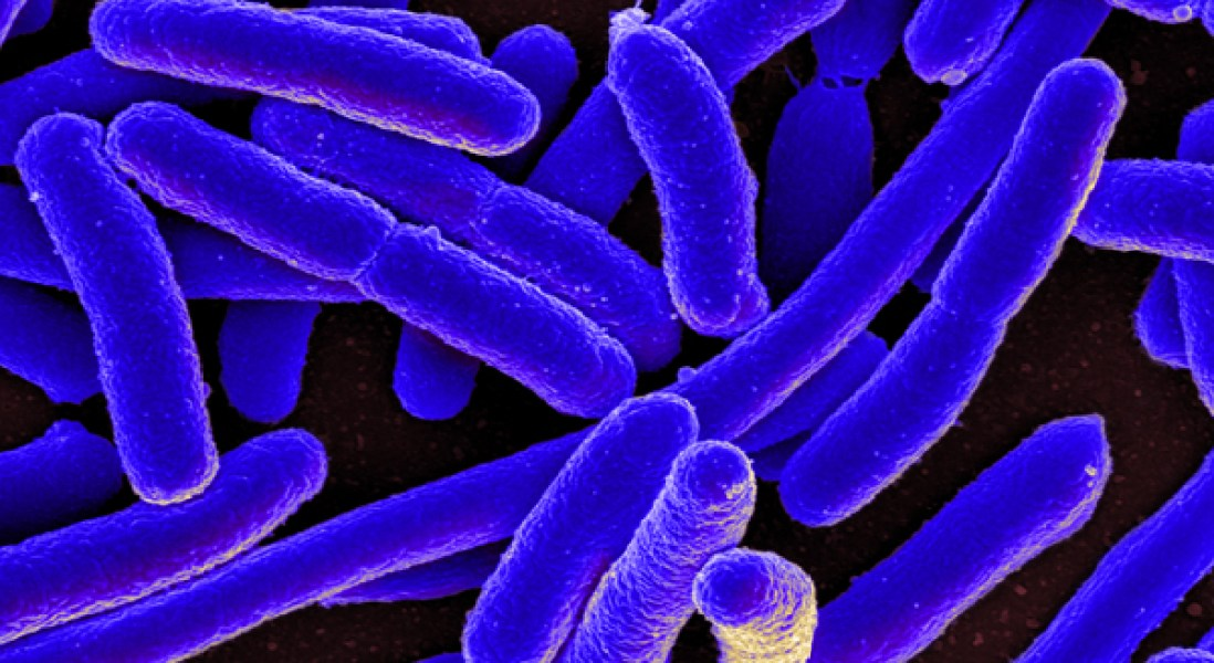 Editing Gut Microbiota Could Be Effective Treatment for Inflammatory Bowel Disease