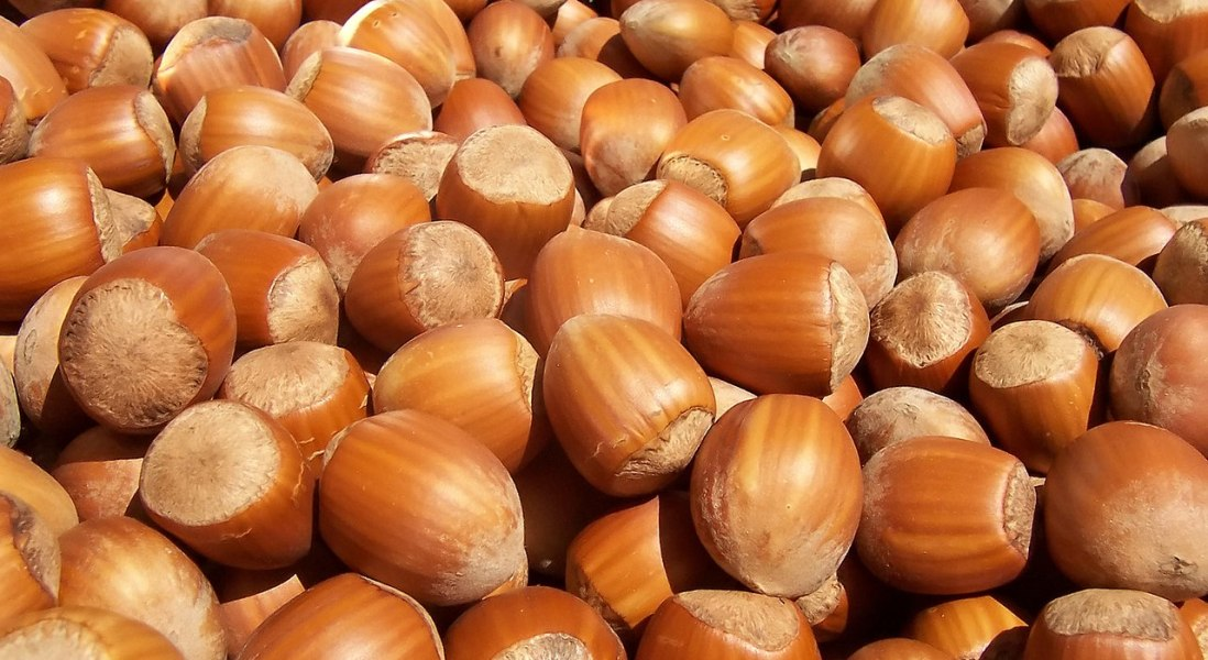 Are Hazelnuts the Next Superfood Ingredient?