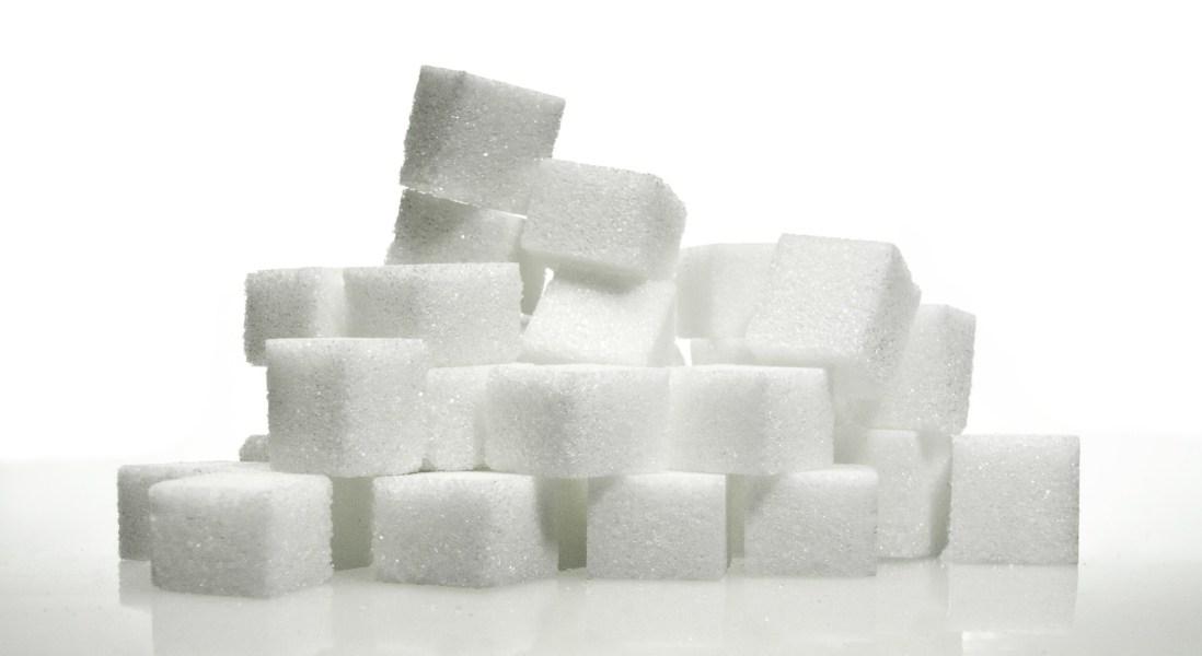 best protein powder to burn fat