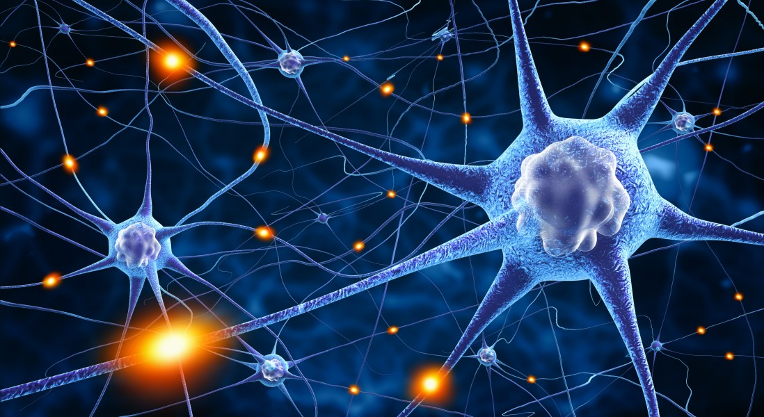 Microtubule-Stabilizing Drugs for Alzheimer's May Be Ineffective Due to Newly-Uncovered Role of Tau Protein