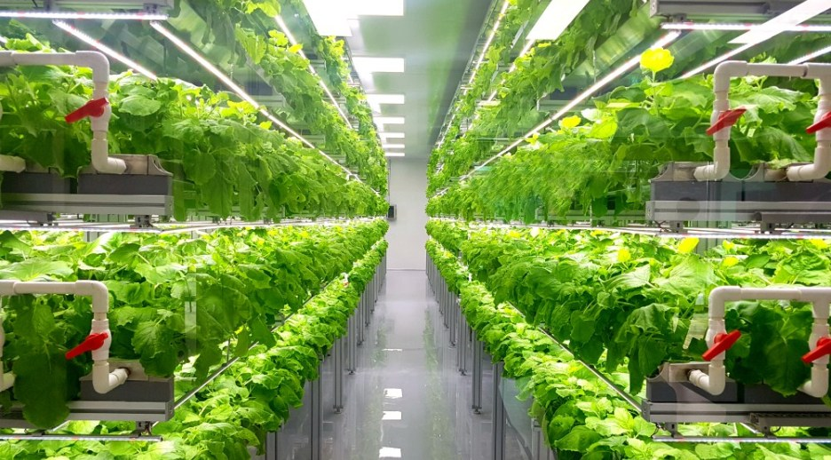 xtalks.com - From Insects to Vertical Farming, The Future of Food is Sustainable