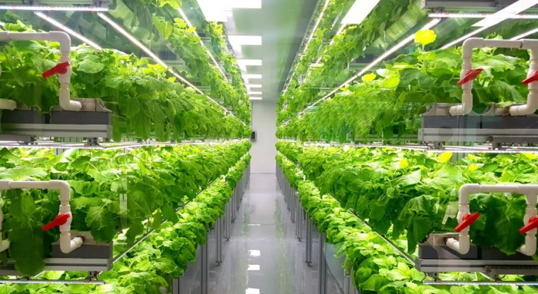 From Insects to Vertical Farming, The Future of Food is Sustainable
