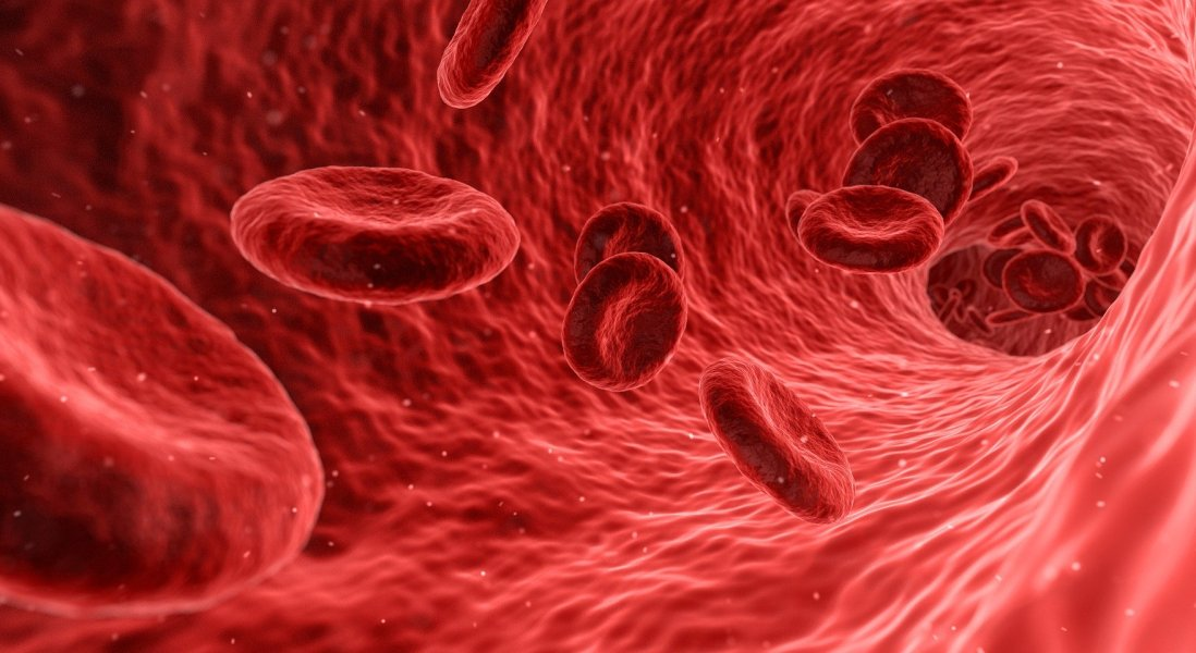 Measuring Hemoglobin Levels with a Smartphone Camera