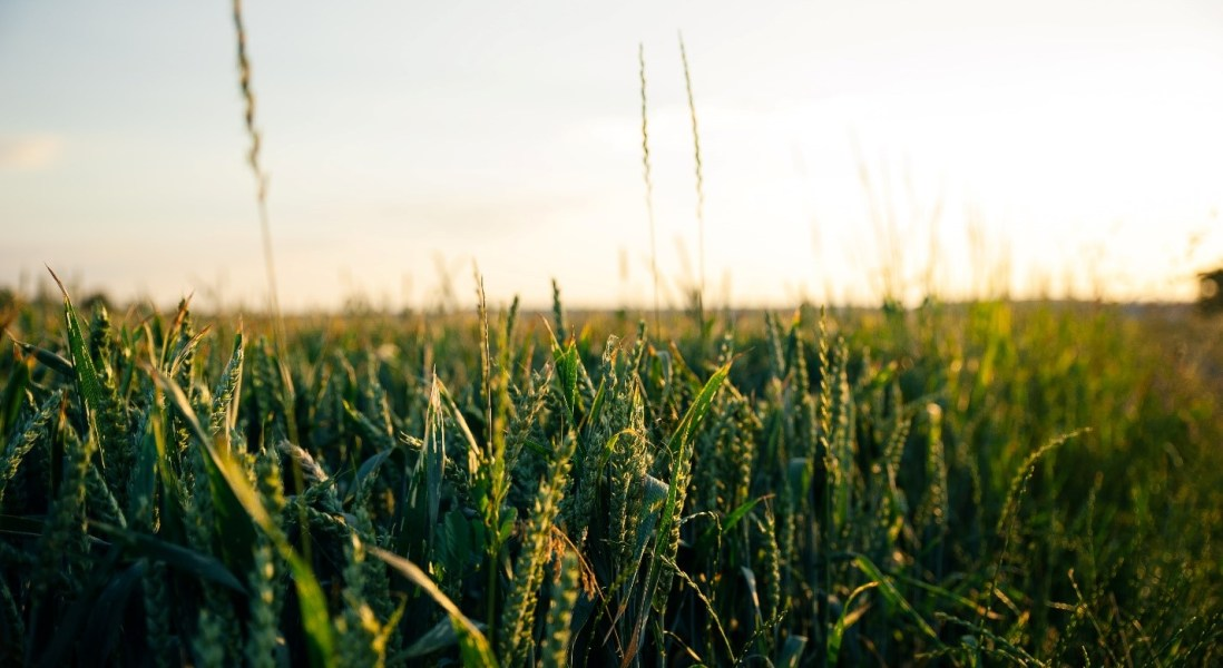 Crops Sprayed With Genetically Barcoded Microbes Could Help Trace Food Poisoning