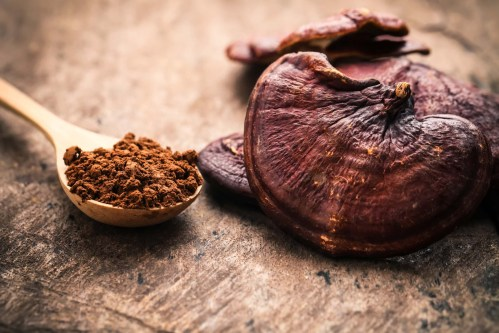Reishi and the Immune System