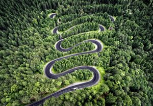 Road winding through a forest