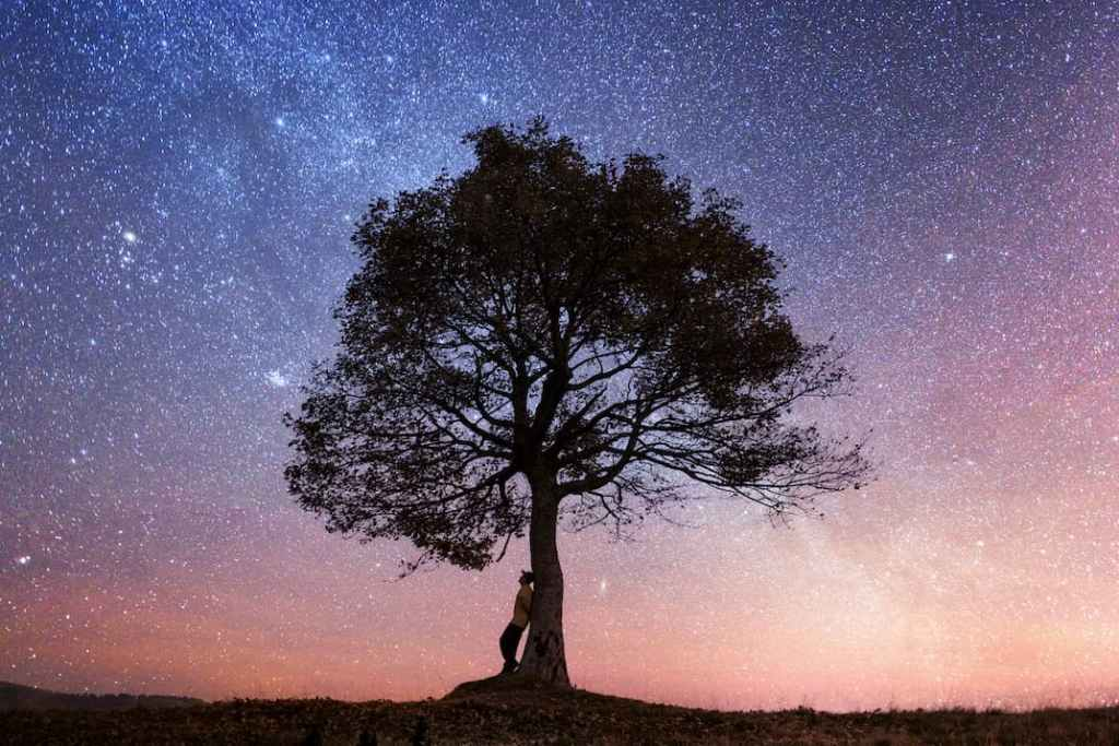 A person leaning on a tree gazing into the cosmos