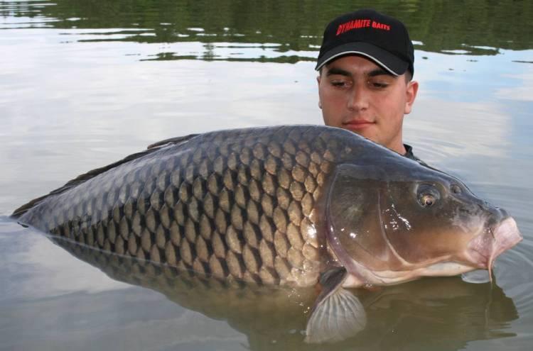 2010 carp