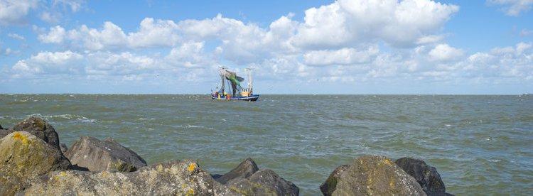 De visstand in Nederland: het echte beeld