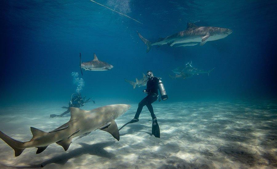 Scuba Diving Guide 3