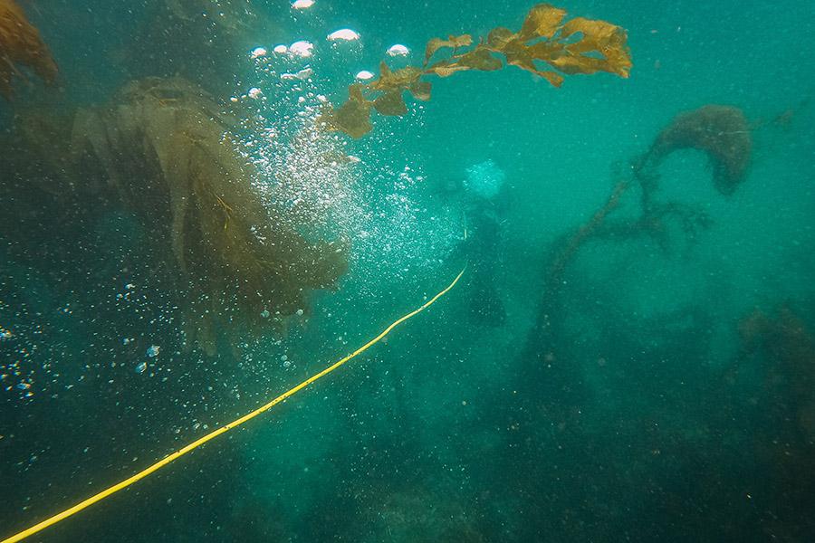 Best dive reel - thumb