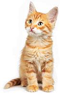 Xulon Press Editor reads book on cats
