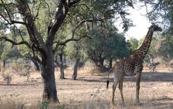 Vakantie_Zambia_110719_0213-24