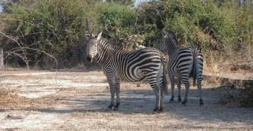 Vakantie_Zambia_110719_0236-28