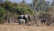 Vakantie_Zambia_110719_0237-29