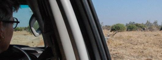 Vakantie_Zambia_110719_0240-30