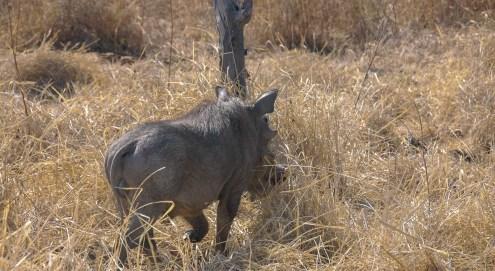 Vakantie_Zambia_110719_0259-33