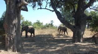 Vakantie_Zambia_110719_0272-35