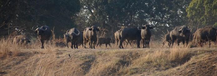 Vakantie_Zambia_140719_0416-73