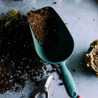 Sweet or Sour? A Gardener's Guide to Soil pH